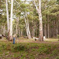 Cox Creek Camping Area, Coolah Tops