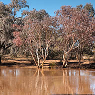 The Paroo River